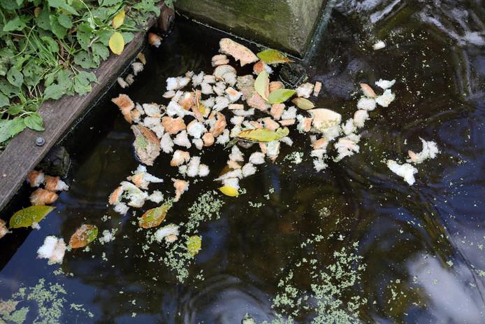 Dit brood langs de Hildo Kroplaan is de watervogels te veel. Gevolg: ratten. De rattenbestrijdingskist staat dicht bij de waterkant.