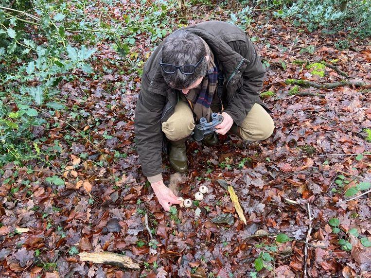 Het Zoerselbos is ook rijk aan paddenstoelen als stuifzwammen.