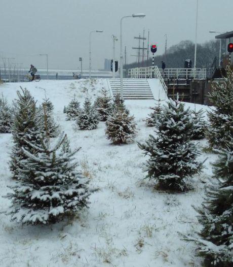 Kerstbomenbos in Noord gaat na de kerst dicht
