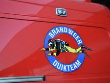 Paard te water in Sint Philipsland