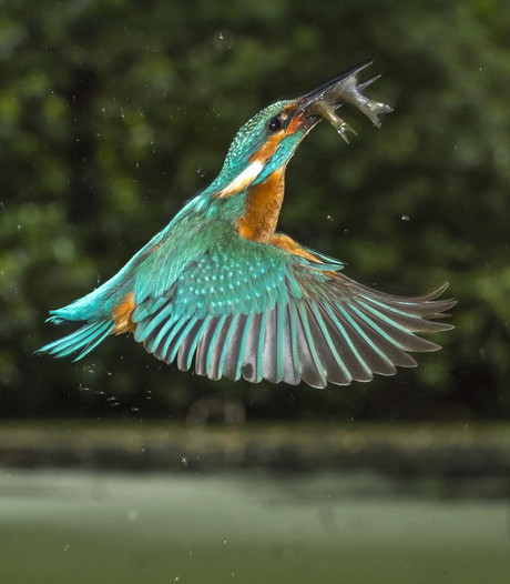 Vogelfoto's favoriet bij WNF-Frans Lanting Awards