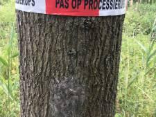 Lintje om boom waarschuwt inwoners Zeewolde voor aanwezigheid eikenprocessierups
