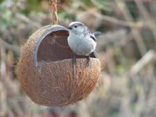 Op zoek naar typische tuinvogels bij excursie in Zaltbommel