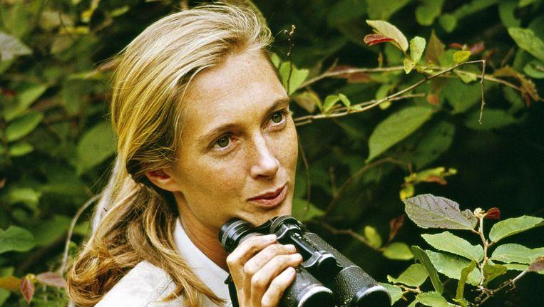 Jane Goodall Beeld