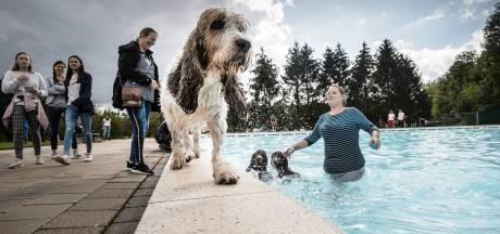 Honden wagen sprong in het diepe, baasjes blijven liever op het droge in Rijssen