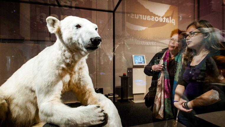 De opgezette ijsbeer Knut in Naturalis in Leiden in juni 2013. Beeld EPA