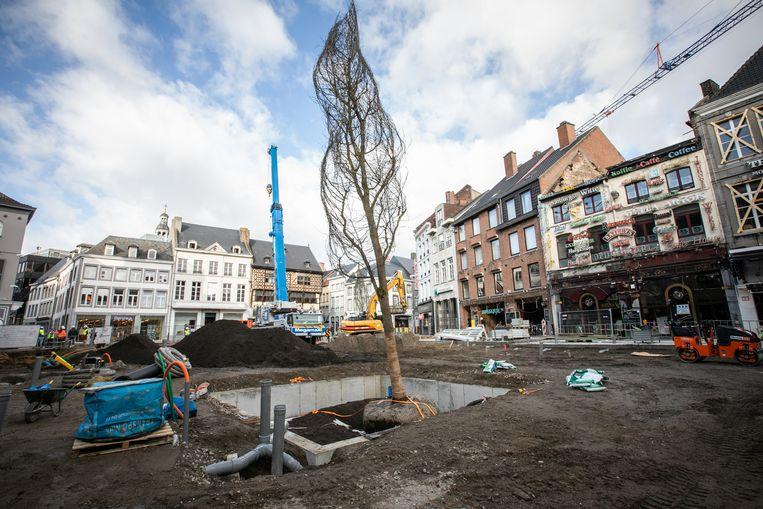 Nieuwe boom op de Grote Markt van Hasselt.