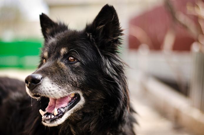 Foto ter illustratie. Het betreft niet de hond die mogelijk vergiftigd is.