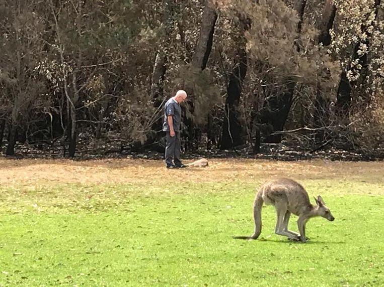 Dierenarts Chris Barton heeft net een kangoeroejong moeten afmaken.