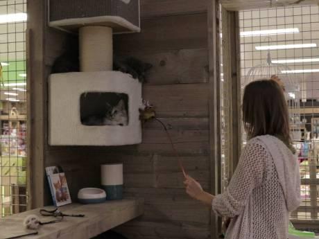 Eerste kattencafé van Gouda geopend
