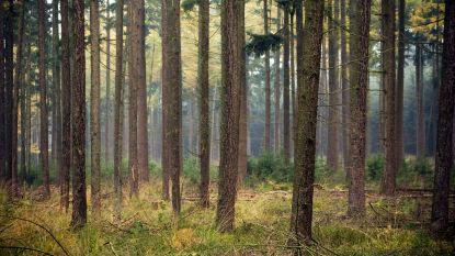 OCMW vangt 1,7 miljoen voor 50 hectare bos