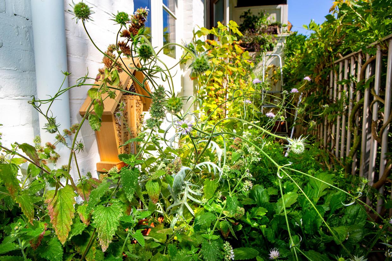 Woekerend groen en het insectenhotel op Caspar Janssens balkon. Beeld Najib Nafid