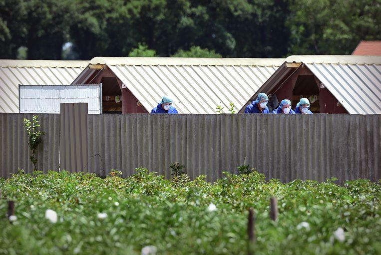 Een nertsenfokkerij in Deurne wordt vanwege het coronavirus geruimd.  Beeld Marcel van den Bergh / de Volkskrant