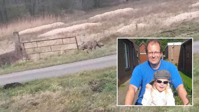 Jan van der Aa zat samen met zijn dochtertje Lieke in de auto toen er een wolf voor de wagen langs rende.