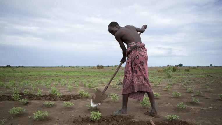 Lapetai Lokalezo, een Nyangatom uit Kangatan, aan het werk op zijn akker. Hij hoopt op een goede oogst, maar dan moet het meer regenen. Beeld null
