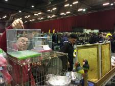 Zwolse vogelmarkt te groot: organisatie stopt ermee