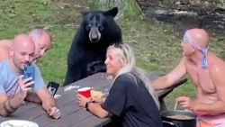 Ongelooflijk: zwarte beer picknickt met mensen en gaat mee op de foto