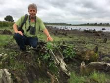 Droogte legt de geschiedenis van De Peel bloot