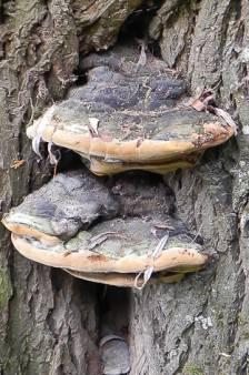Een rokende paddenstoel