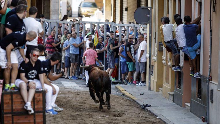 In enkele Spaanse steden zijn de beruchte stierenlopen een traditie, zo ook hier in Meliana nabij Valencia.