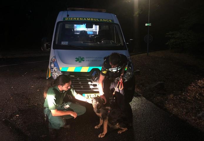 De hond uit Heteren werd dankzij de dierenambulance Nederrijn en de politie van Renkum gevangen in Doorwerth.