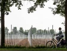 Fruit wint terrein in Nude tussen Rhenen en Wageningen
