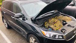 Eekhoorns laten verrassing achter onder motorkap van auto
