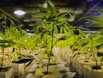 Twintiger dumpt vriendin, schoonmoeder tipt zijn cannabisplantage aan politie