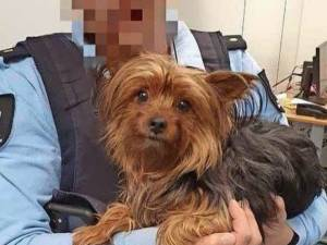 Un passager jette son chien dans une poubelle à l'aéroport car il n'aurait pas été accepté à l'hôtel