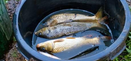 Voortaan ook legaal vissen op KBP Hapert