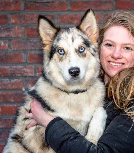 Deze hond is misschien wel de mooiste van Nederland