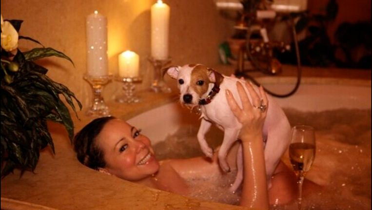 De hond vertoont grote gelijkenissen met zijn baas. De grootste gelijkenis is in de ogen te vinden. Mariah Carey gaat graag in bad met haar hond. Beeld Photo News