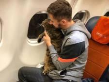 Un passager russe embarque son chat trop lourd en cabine, la compagnie aérienne le sanctionne