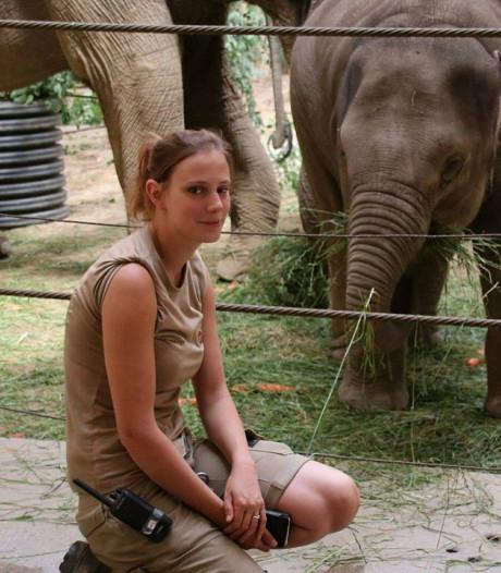 Dierenverzorgster Belgische dierentuin verdedigt doodschieten leeuwin