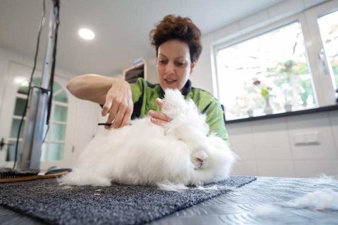 Ingrid van Riel van Innie's Pet Wellness in Lage Zwaluwe knipt de haren van het angora-konijn van Monique Kerpel.