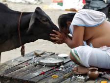 India: man gelyncht nadat hij een koe slachtte