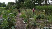 """Marleen heeft een klimaatbestendige tuin: """"Alleen maar voordelen"""""""