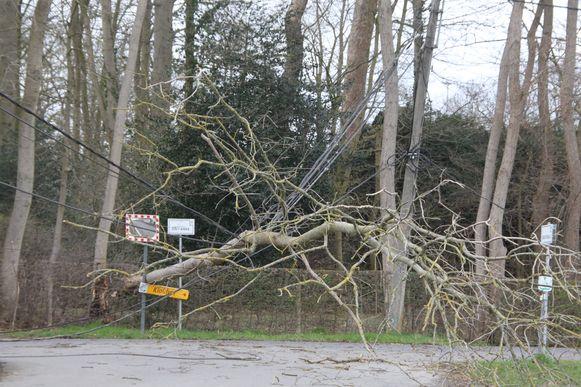 Aan Sint-Anna in Marke kwam een boom op de elektriciteitskabels terecht.