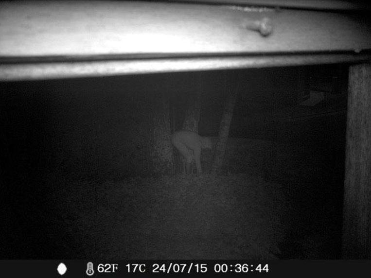 Op beelden van een wildcamera is buurvrouw Odette C. 's nachts tussen de drie berken te zien.
