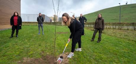 Arnhem krijgt 5000 extra bomen, en dat is 'pas het begin'