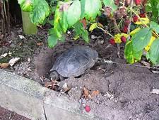 Echtpaar ketent schildpad aan boom in achtertuin tijdens vakantie