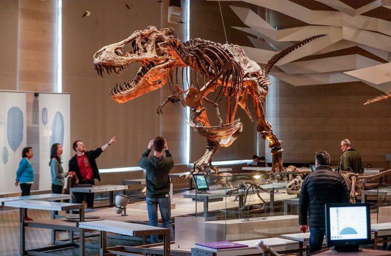 Een reproductie van het skelet van een T. rex, in het Koninklijk Belgisch Instituut voor Natuurwetenschappen.  Beeld EPA