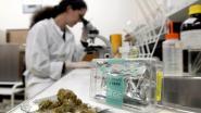 Provincie Limburg levert bouwvergunning af voor onderzoeksinstituut medicinale cannabis