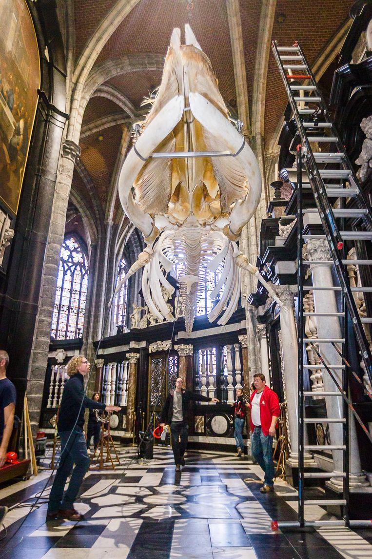 Medewerkers van UGent en een verhuisfirma hielpen de kolos, van zo'n 11 meter lang en 600 kilogram zwaar optillen.