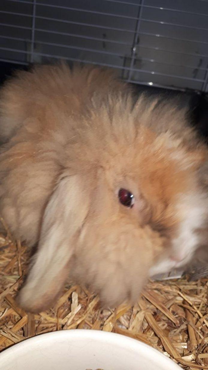 Een van de gevonden konijnen