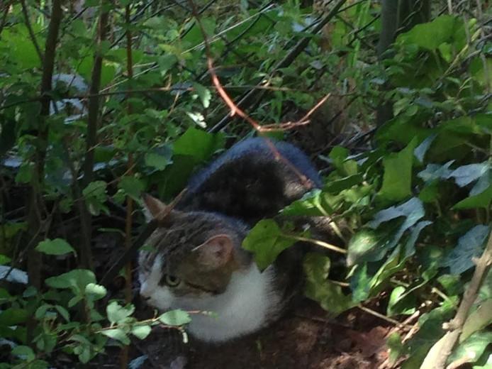 De katten worden losgelaten bij de inrichting in Vught
