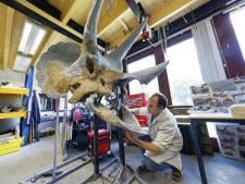 Ze zullen de triceratops gaan missen in Het Oertijdmuseum in Boxtel