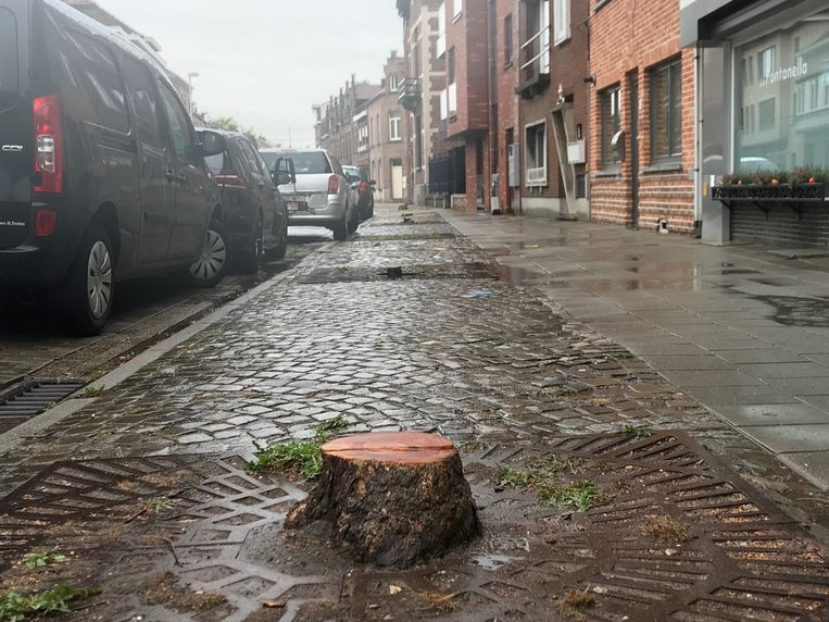 De acht bomen die al jaren aan het begin van de straat stonden, zijn gekapt.
