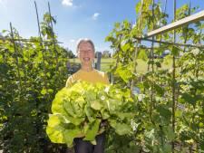 Eten van je 'eigen land' op een herenboerderij komt eraan voor Alphen en Nieuwkoop