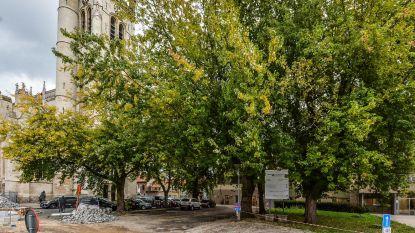 Bomen aan Sint-Medarduskerk worden allemaal geveld